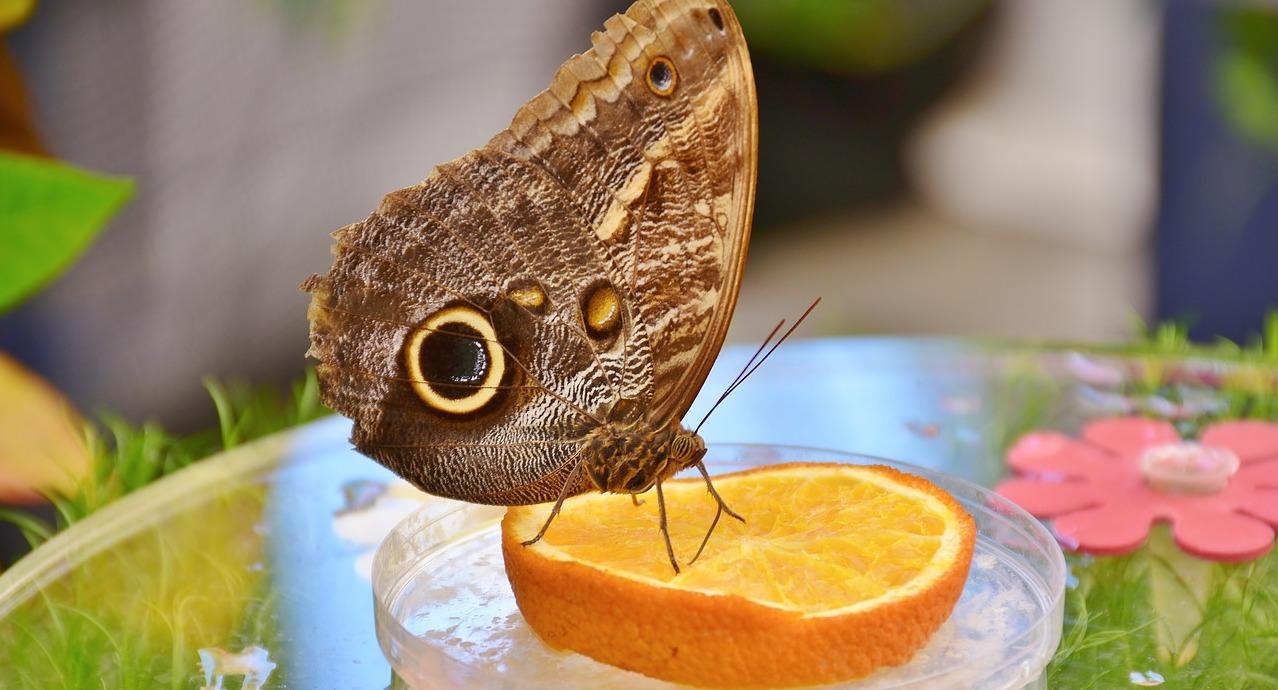 butterfly-2442244_1280