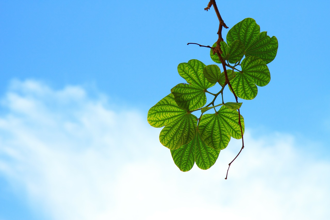 leaves-15757_1280